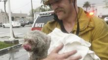 Firefighters revive dog pulled from California fire in mouth-to-snout rescue