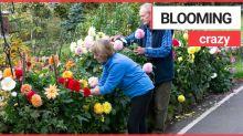 Rentner sollen gefährliches Blumenbeet entfernen – so urteilte der Stadtrat