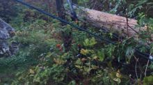 Brazen vandals chainsaw 3 Port Coquitlam hydro poles