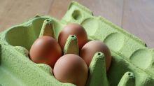 Bei wiederverwendeten Eierkartons besteht Salmonellengefahr