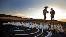 Visit the Galapagos Like a Royal