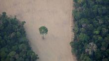 Oito países europeus fazem apelo para que Brasil tome medidas contra desmatamento da Amazônia
