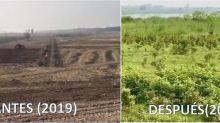 """El antes y el después del proyecto """"10.000 millones de árboles"""" en Pakistán"""