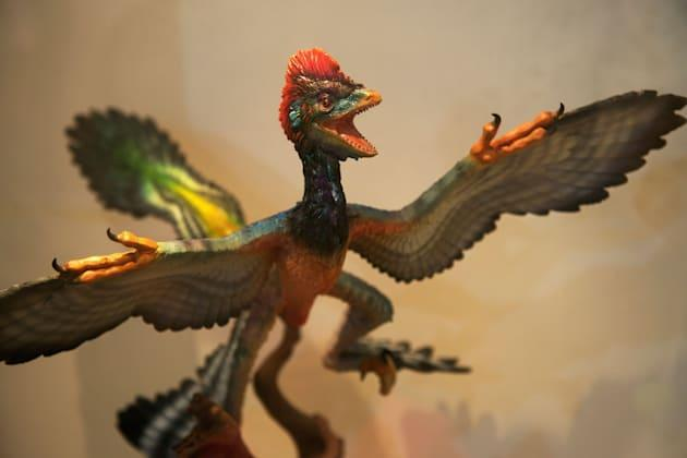 Scientists create chickens with dinosaur snouts to study evolution