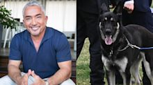 'Dog Whisperer' Cesar Millan defends Major Biden following incidents: 'We can't blame the dog'