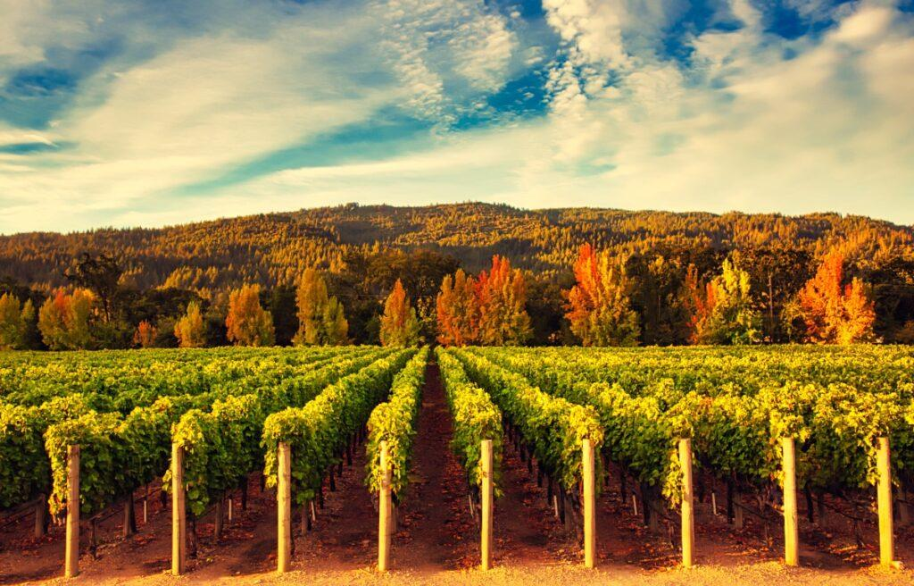 Replay: IPO Edge Hosts Virtual Forum and Tasting with Bespoke, Vintage Wine Estates