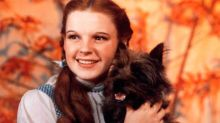 Preparan un remake de El mago de Oz pero desde la perspectiva de Toto... ¡el perro!