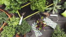 9 (Actually Legit!) Places to Buy Seeds and Plants for Your Garden