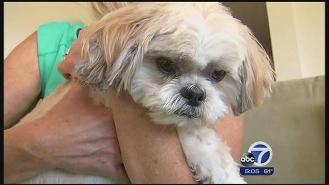Petco settles with Shih Tzu's family after alleged grooming injuries