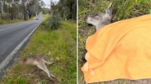 Tragic detail in gruesome photos leads to fear of 'disturbing' trend