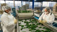 México defende seus pimentões na revisão de acordo com a Europa