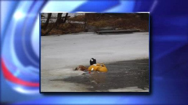 Dog falls through ice, firefighters rescue him
