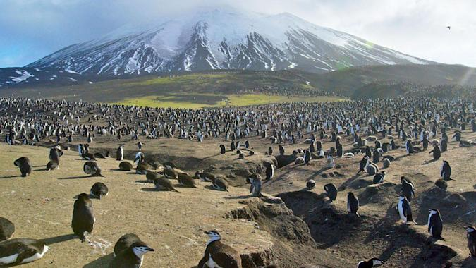 What's on TV: 'Planet Earth II,' 'Chef's Table' and 'The Good Fight'