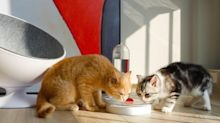 5 Products that Make Being a Pet Owner Virtually Effortless