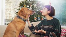 UK dog owners issued warning ahead of Christmas