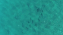 Stunning Aerial Footage Captures Shark Feeding Frenzy Off North Stradbroke Island