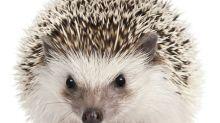 Biodiversité : 10 espèces animales menacées près de chez nous