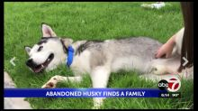 Husky seen running after car when he's abandoned is saved – and Texas man is arrested