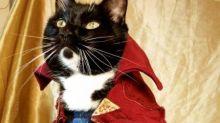 Perfil no Instagram veste gatos como personagens do cinema