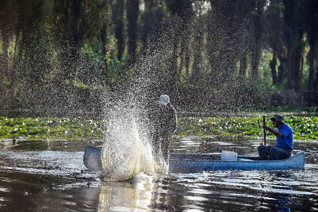A dwindling number of fishermen work the floating gardens of Xochimilco in Mexico City, catching carp and and tilapia -- invasive species that are threatening an already strained ecosystem (AFP Photo/ALFREDO ESTRELLA)