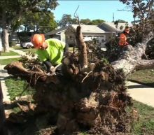 Powerful SoCal winds topple trees, power lines