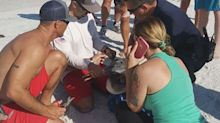 Lifeguards and police help to free pelican tangled in fishing gear