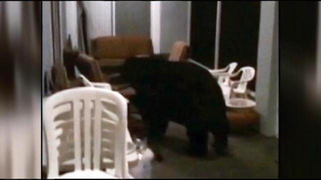 Black Bear Visits Florida Man's Home Twice