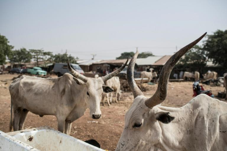 Nigeria's Katsina state has been targeted by kidnappers and cattle thieves in recent months