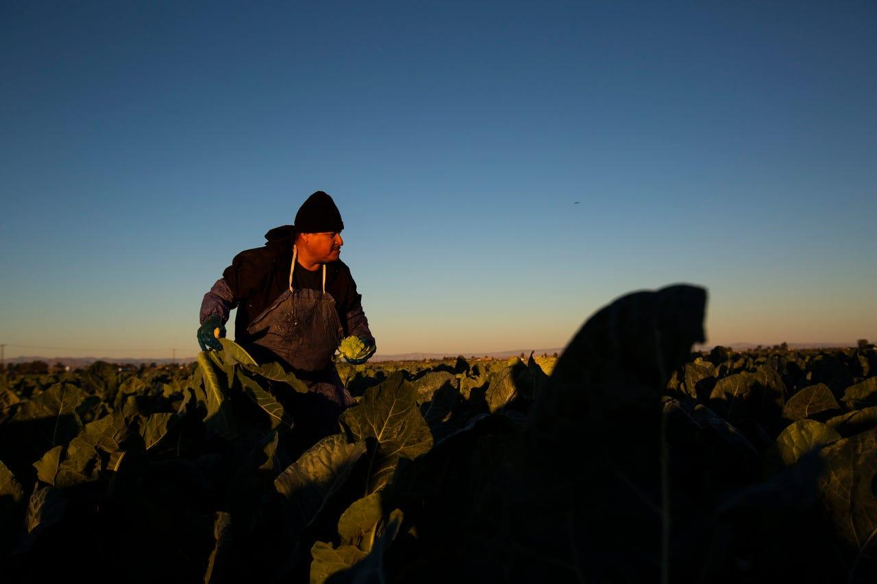 Worked to death: Latino farmworkers have long been denied basic rights. COVID-19 showed how deadly racism could be.
