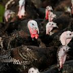 More than 10,000 turkeys at a Yorkshire farm set to be culled after an outbreak of avian flu