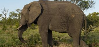 Suspected poacher trampled to death by elephants