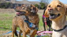 Frito the rescue dog reunited with his siblings after a viral Facebook post