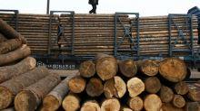 EUA conclui que Canadá vende madeira com dumping
