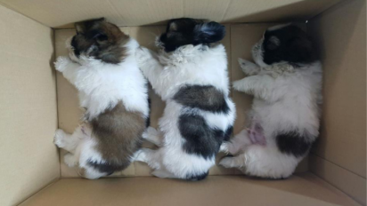11 smuggled puppies confiscated at Woodlands Checkpoint