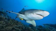Descubren un enigmático evento que extinguió al 90% de los tiburones del mundo