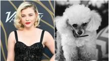 Chloe Grace Moretz Loses Second Dog in a Month: 'I Love You Little Lady'