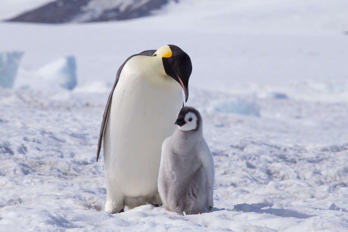 17 Gorgeous Photos Of Wild Penguins