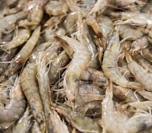 Saudi Arabia Is Shipping 6,000 Tons of Shrimp a Week to China