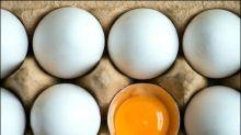Foodwatch erhebt neue Vorwürfe gegen Bio-Legehennenbetriebe in den Niederlanden