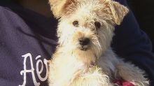 Outbreak of virulent dog flu in up to 13 Florida canines