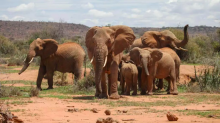 Progress against wildlife crime under threat if attention fades, Africa's leaders warn