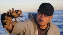 Canned meat and chicken wings secret to catching crabs in northern Quebec