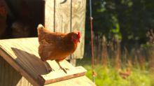Blue Hill's Dan Barber: The farm-to-table movement has failed