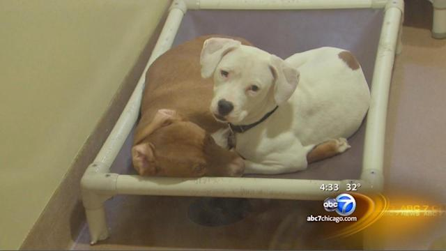 Lemont man leaves $1.5 million to Chicago-area no-kill animal shelters