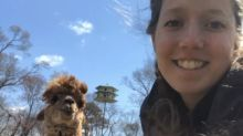 Alpacas join birthday parties, business meetings as New York farm offers video calls with furry friends