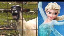 Let It Goat