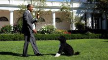 Obamas' dog Bo dies: 'We said goodbye to our best friend'