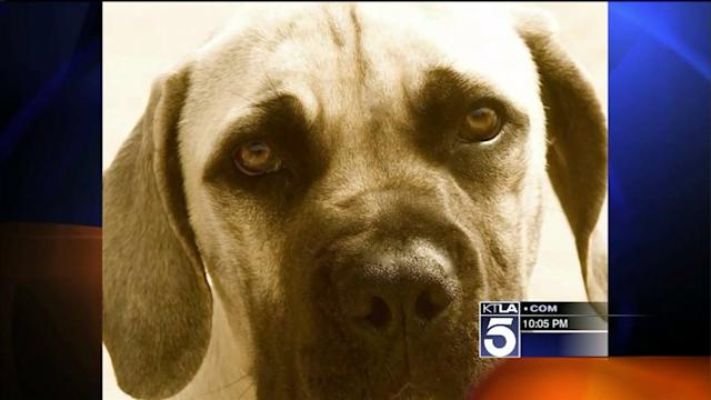 Pacific Palisades Residents Want `Dangerous` Dog Evicted From Neighorhood