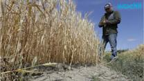 California Farmers Give In, Agree to Cut Water USe
