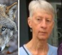 British tourist mauled to death in Greece by rabid wolves not stray dogs, coroner believes